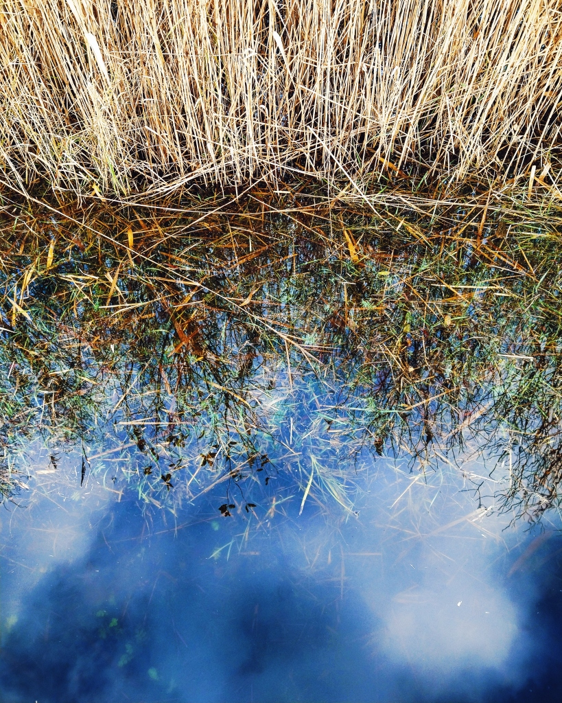 Reflection of sky, blue with clouds on water. reeds at top of image