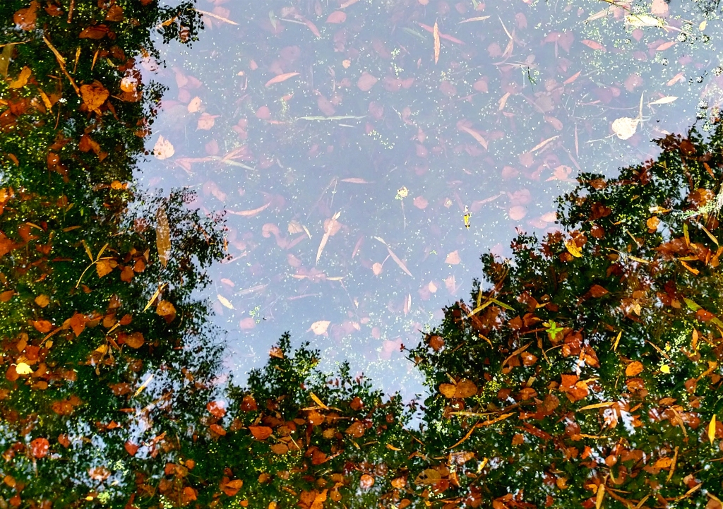 green trees reflecting on water around edge. autum leaves brown in water